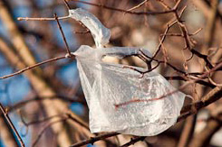 The Earth in a Plastic Bag